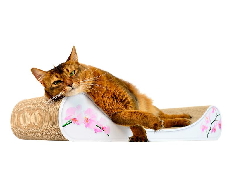 # 050 - orchid - cat-on cat sofa Le Divan
