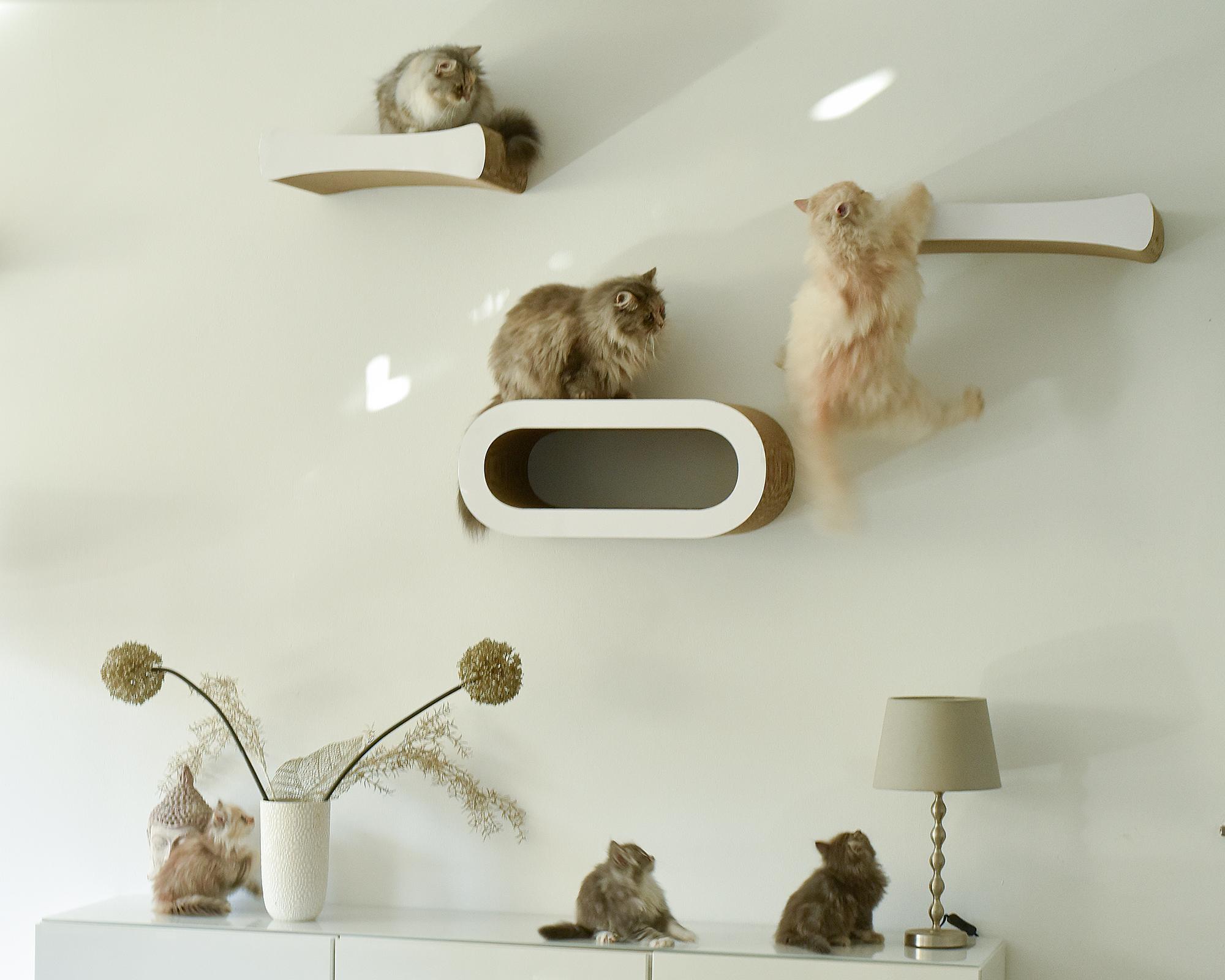 Le Maitre wall-kit cat shelve