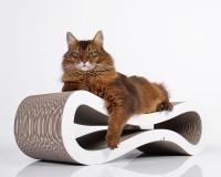 Preview: Cat Racer cat scratcher