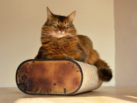 Preview: scratch post | cardboard cat scratcher