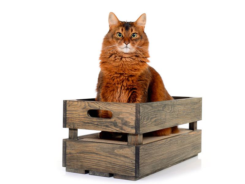 Kratzkiste in Fichte - Basalt | Katzenstiege mit Kratzpappe
