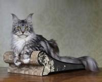 Lounger cat scratcher
