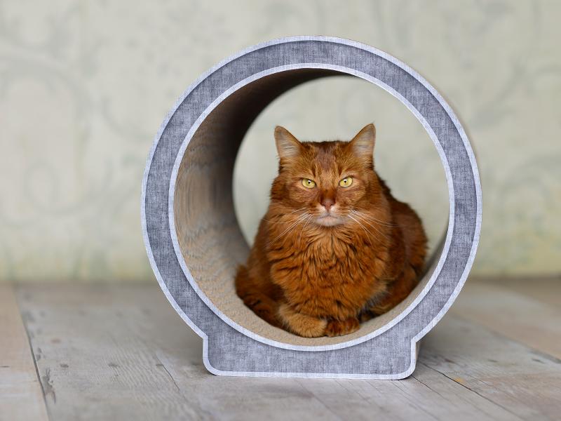 Design cat tree Le Rond | cardboard cat scratcher