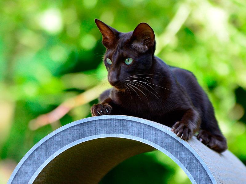 cat scratching furniture Rond Point   cardboard cat tree