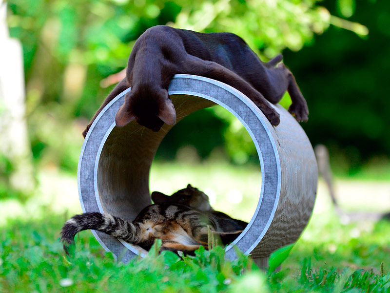 cat tunnel and scratch post cat-on Le Rond