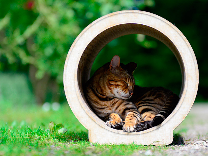 cat tree Le Rond |cat scratching furniture