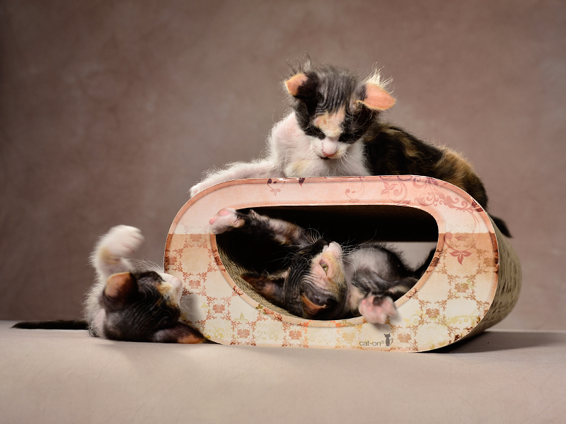 cardboard cat scratcher Le Tunnel   eco-friendly cat products Made in Germany
