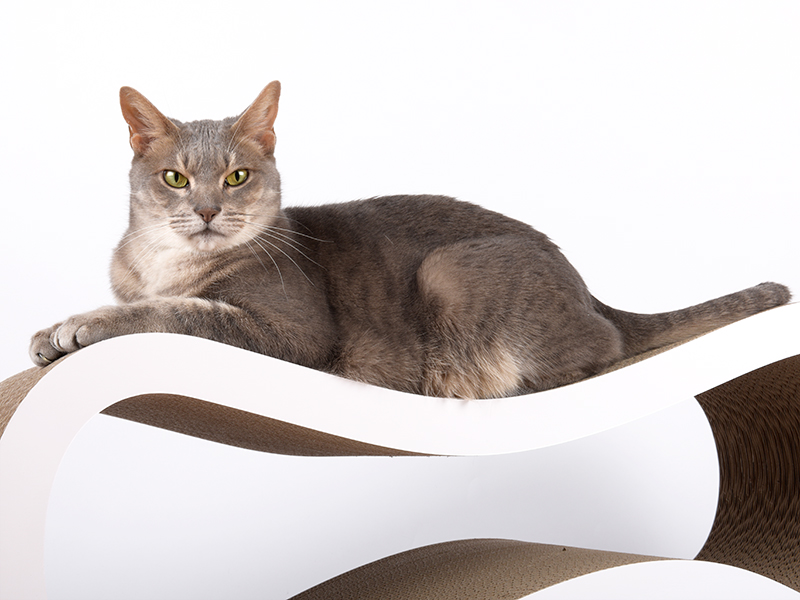 cat-on Singha L | deisgn cat furniture handmade in Germany