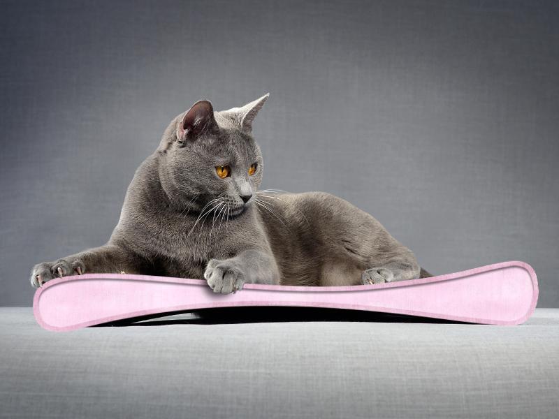robust cardboard cat scratcher Grattoir Junior