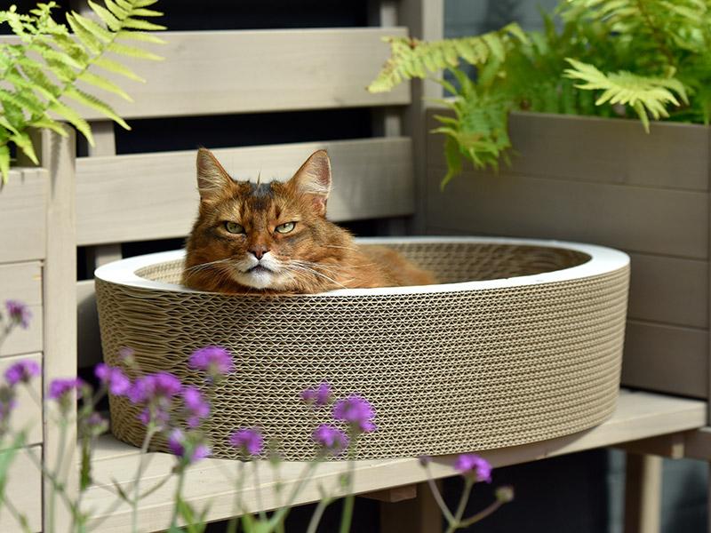 Ovale Katzenschale - Katzenkörbe aus Wellpappe