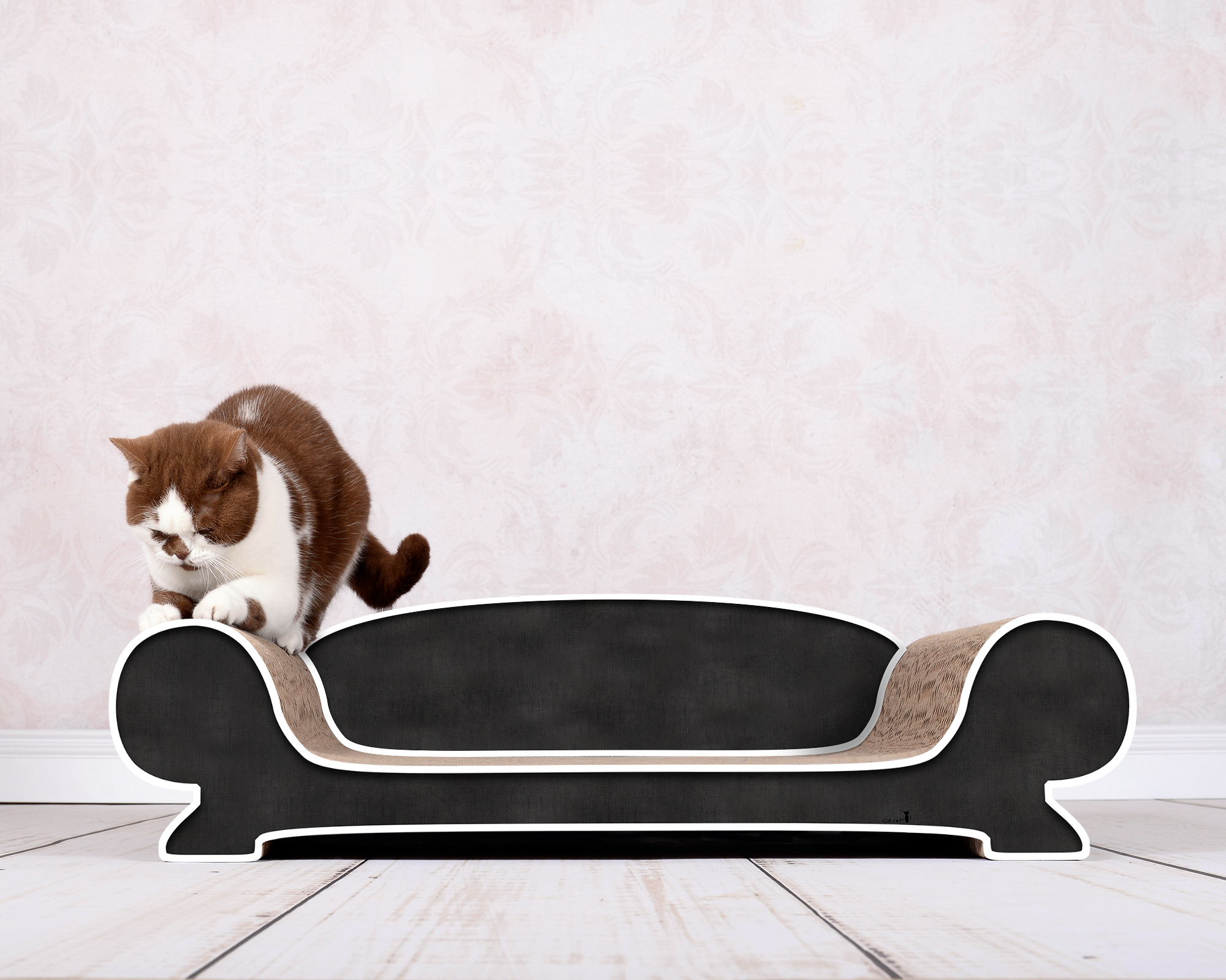 Black cat lounge Vertige with white rims