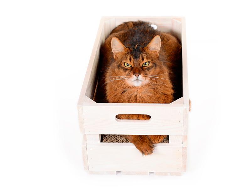 Katzenstiege S - Fichte geweißt
