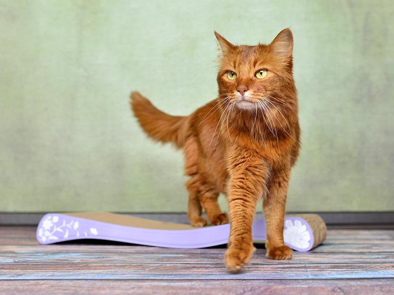 scratchboard La Ola | handmade cardboard cat scratcher