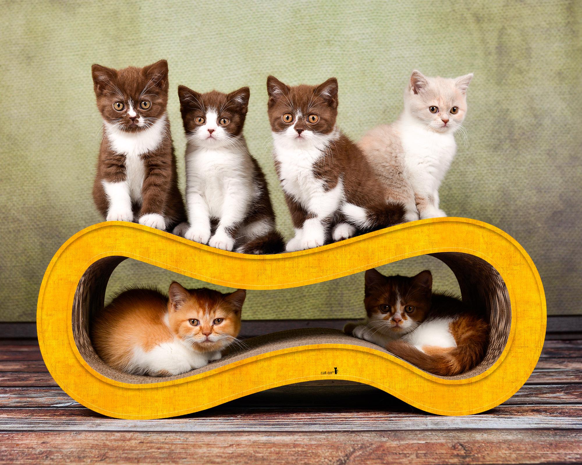 dark yellow colored cat scratcher Singha M