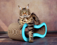 Preview: Design cardboard cat scratching post - color light blue 006d