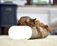 Preview: La Banquette cat scratcher