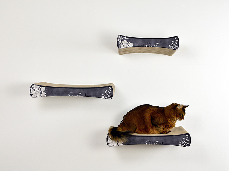 Le Plateau cat shelve