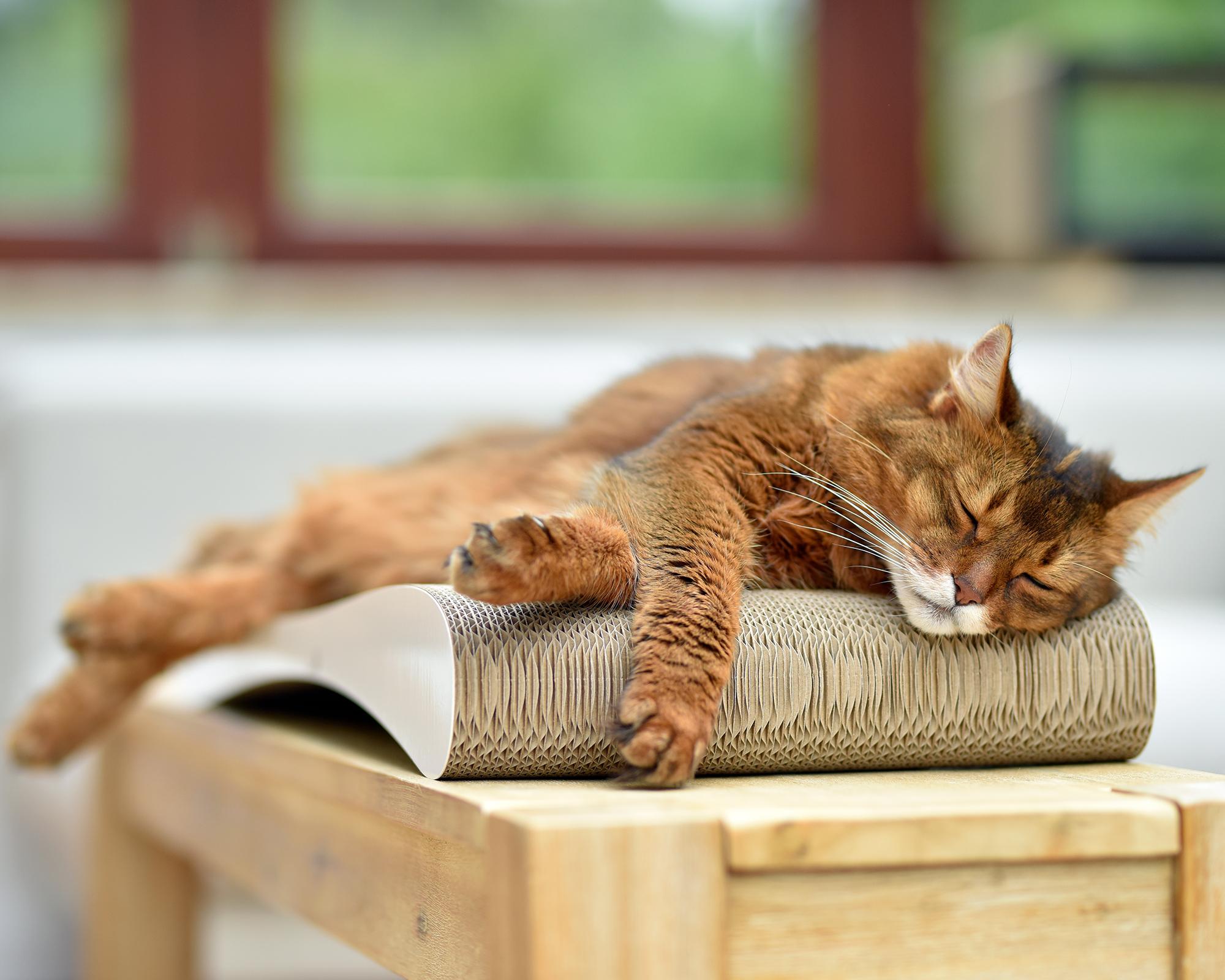 Grattoir Slim Line design cat scratcher