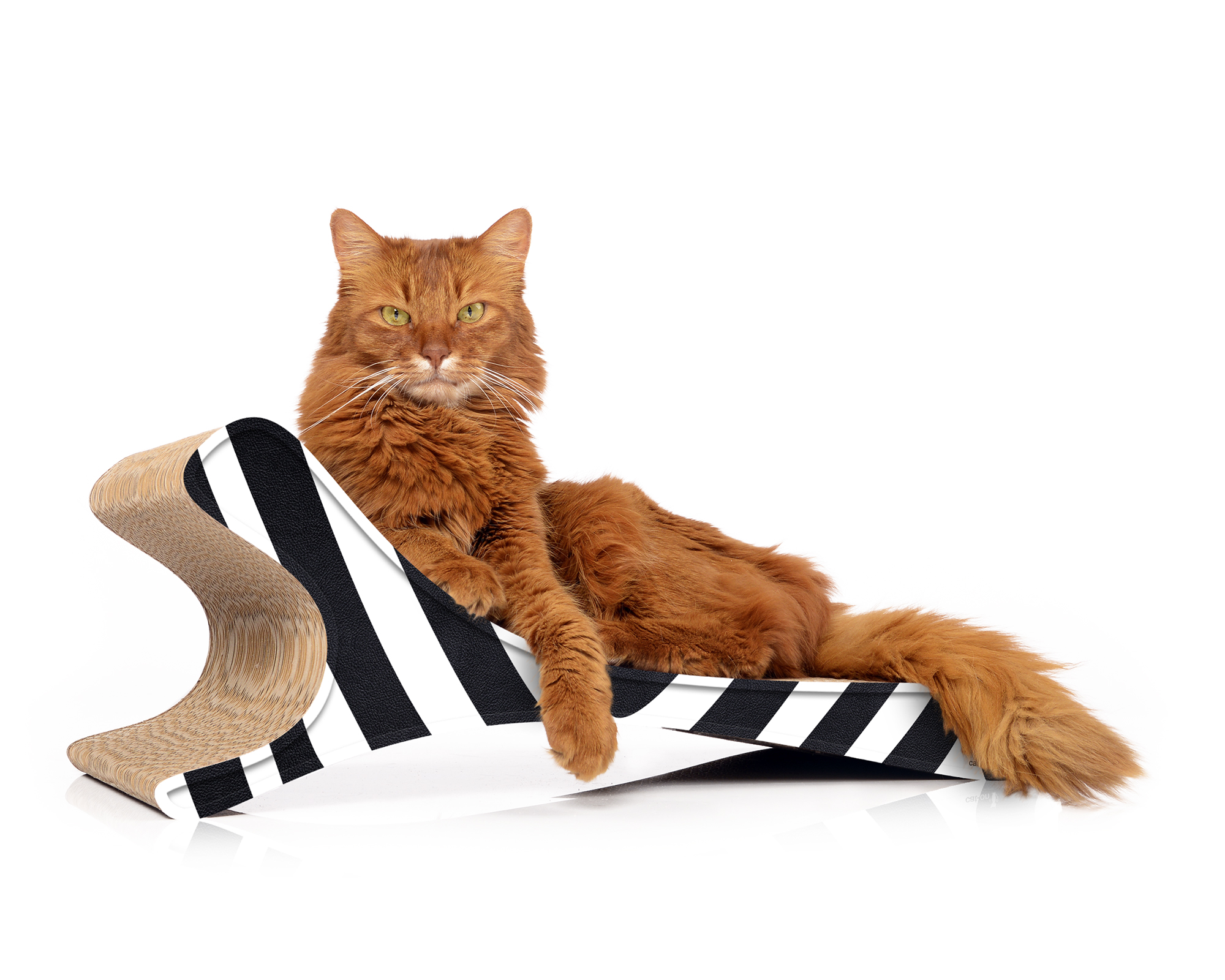 cardboard cat scratcher Feline