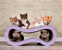 Preview: Design cat furniture Singha M in lilac