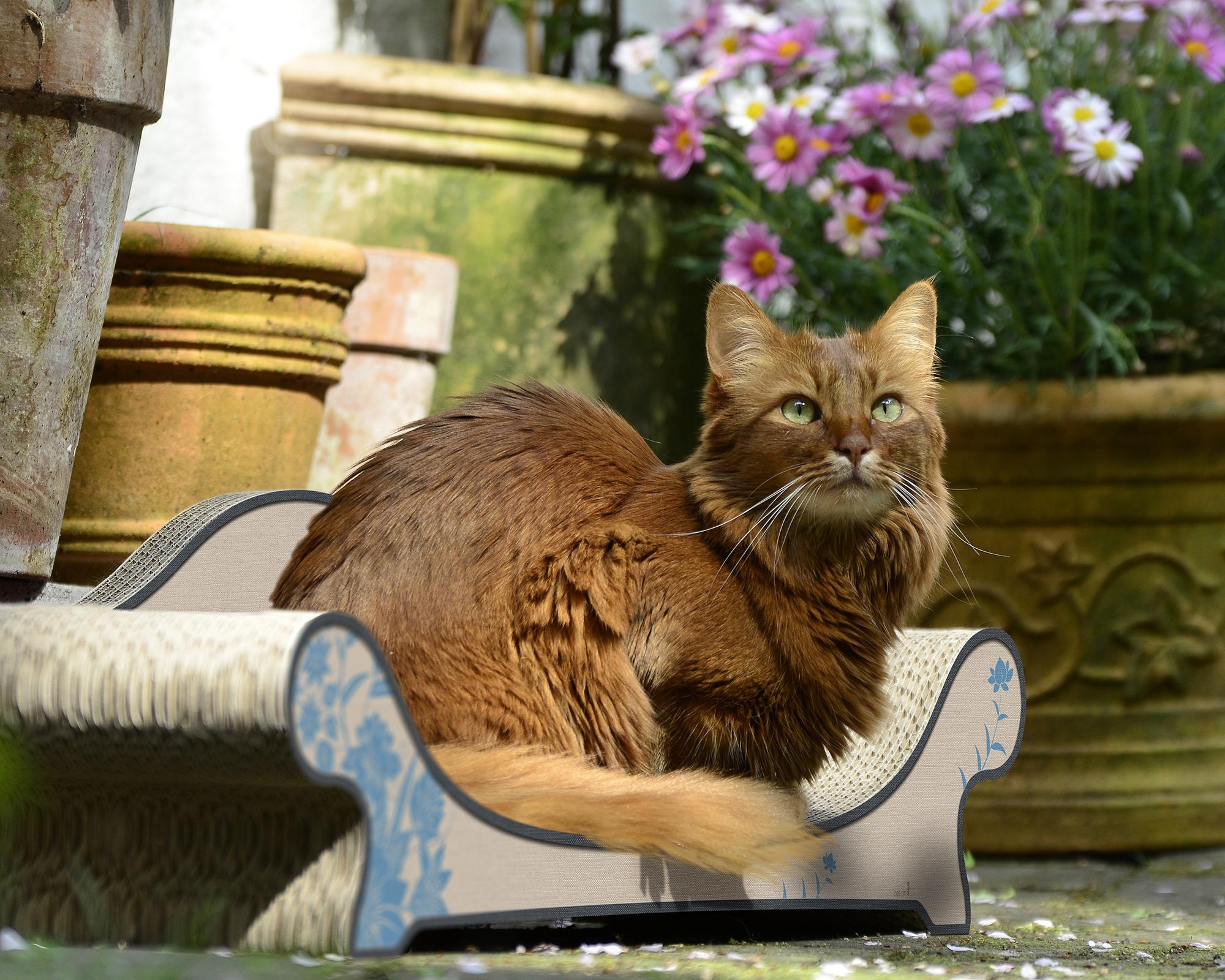 Le Canapé Plus design cat scratcher
