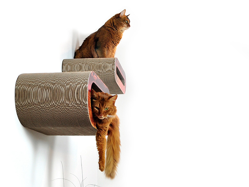 cat shelves - design cat wall solutions