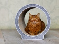 Design cat tree Le Rond | cardboard cat scratcher