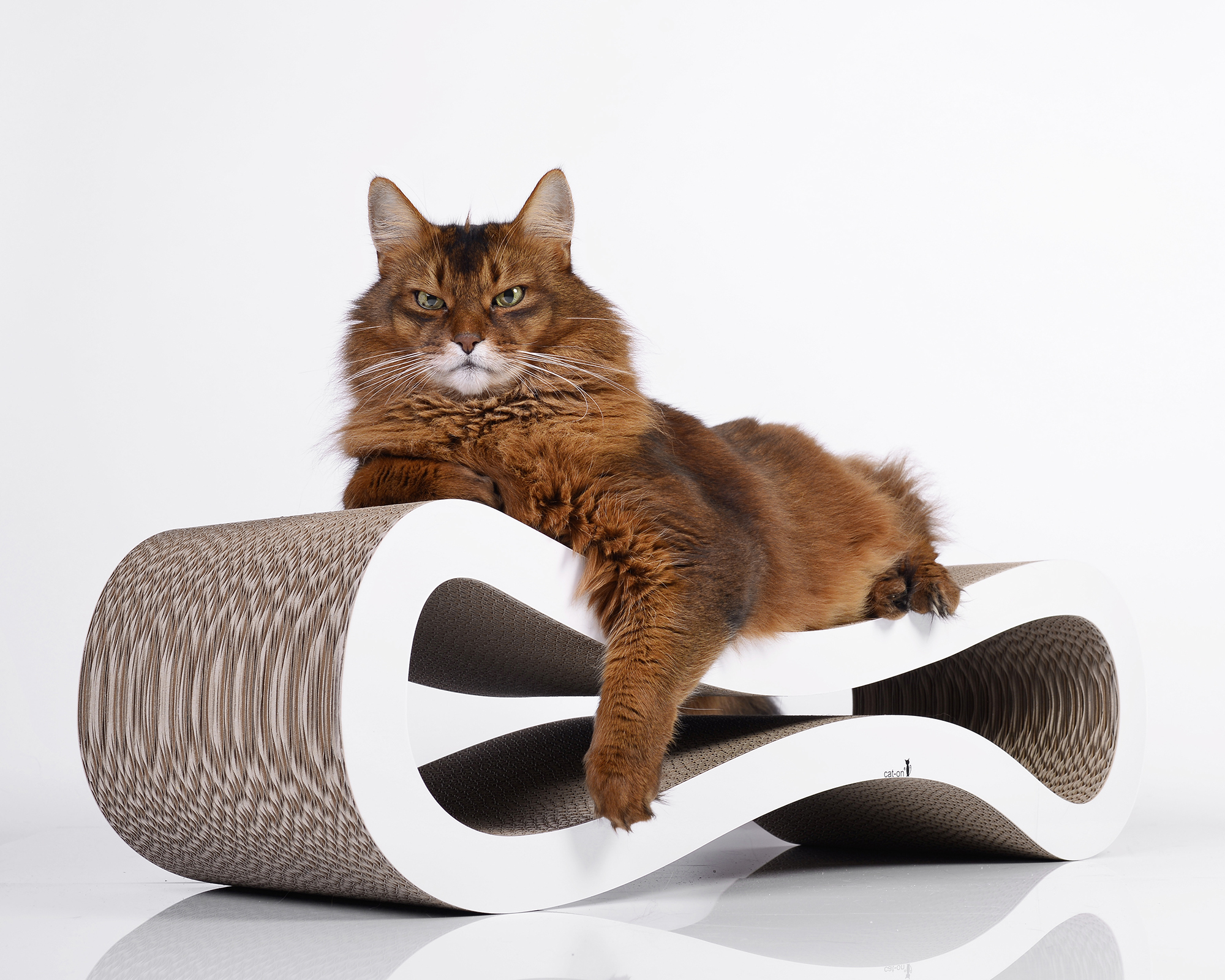 Cat Racer cat scratcher