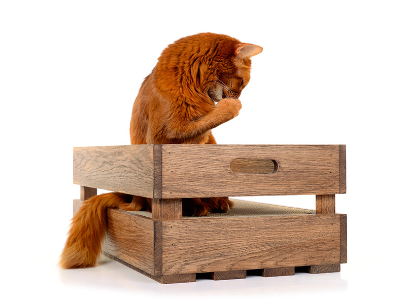 cat-on cat crate - the ultimate wooden and cardboard scratching box