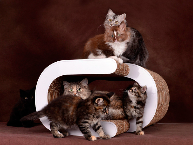 cat-on cardboad cat furniture La Vague XL |premium cardboard cat scratcher