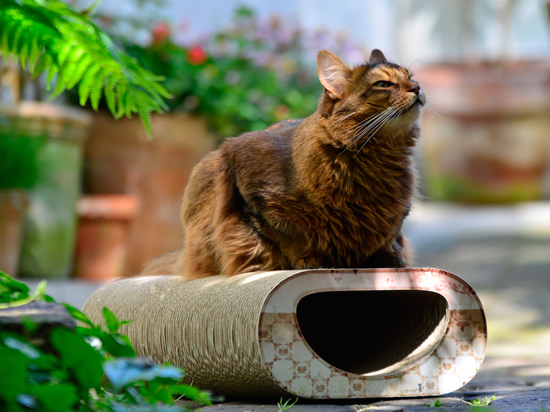 Design cat furniture Le Tunnel, made of ofourless, eco-friendly and robust corrugated cardboard