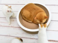 cat basket La Coupe